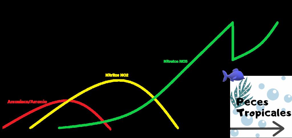 ciclado de acuario, ciclo del nitrogeno