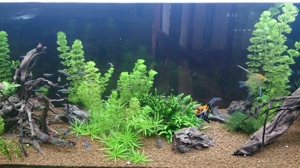 nitritos acuario